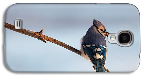Blue Jay With Nuts Galaxy S4 Case by Everet Regal