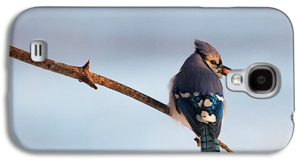 Blue Jay With Nuts Galaxy S4 Case
