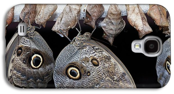 Blue Morpho Butterflies And Cocoons Galaxy S4 Case by Dirk Wiersma