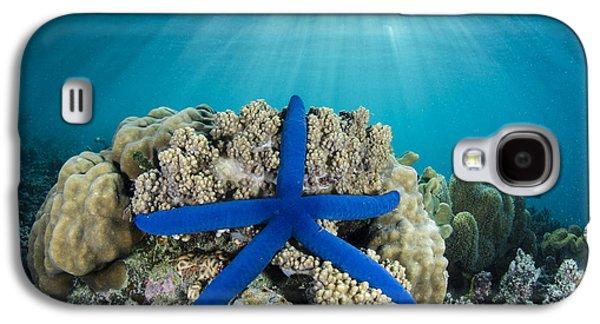Blue Sea Star Fiji Galaxy S4 Case by Pete Oxford