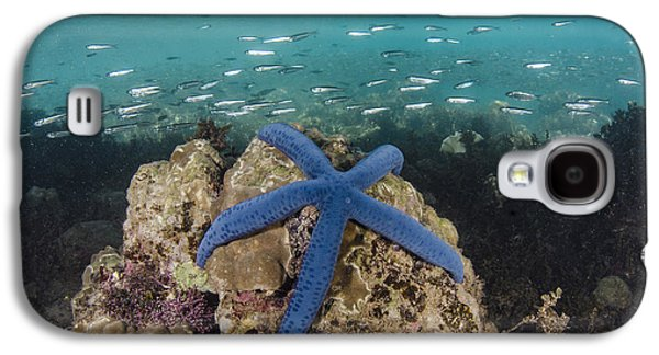 Blue Sea Star On Coral Reef Fiji Galaxy S4 Case by Pete Oxford