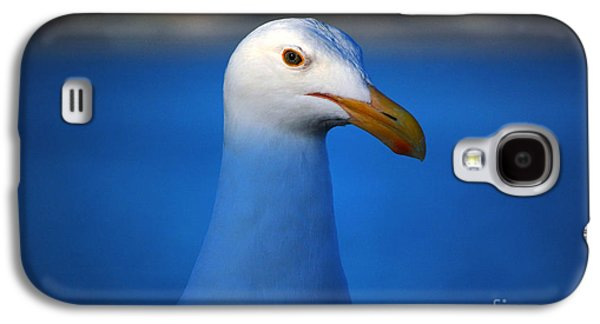 Blue Seagull Galaxy S4 Case by Debra Thompson