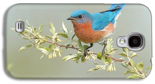 Bluebird Floral Galaxy S4 Case by William Jobes