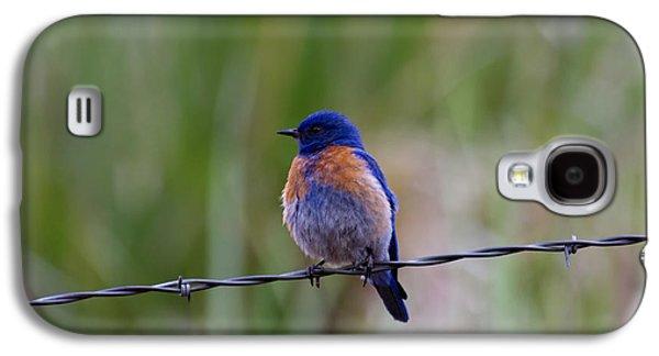 Bluebird On A Wire Galaxy S4 Case by Mike  Dawson