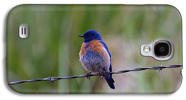 Bluebird On A Wire Galaxy S4 Case
