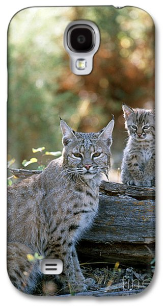 Bobcat Adult And Young Lynx Rufus Galaxy S4 Case by Art Wolfe