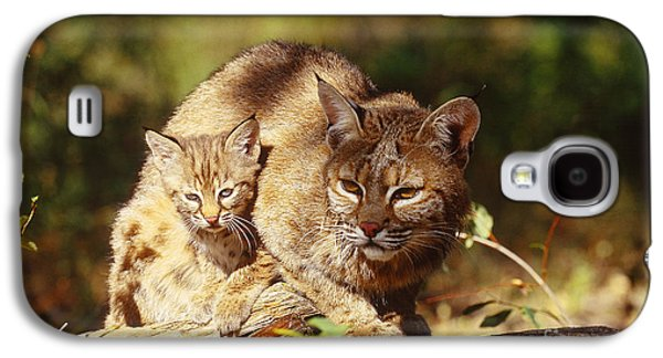 Bobcat And Young, Montana Galaxy S4 Case by Art Wolfe