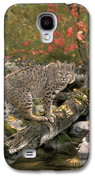 Bobcat Felis Rufus Galaxy S4 Case by Ron Sanford