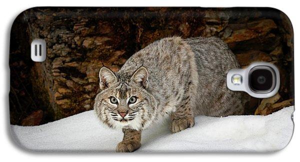 Bobcat In Snow (captive Galaxy S4 Case
