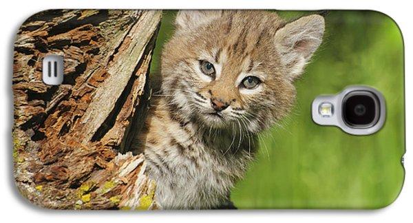 Bobcat Kitten  Felis Rufus  Peeks Galaxy S4 Case by Rebecca Grambo