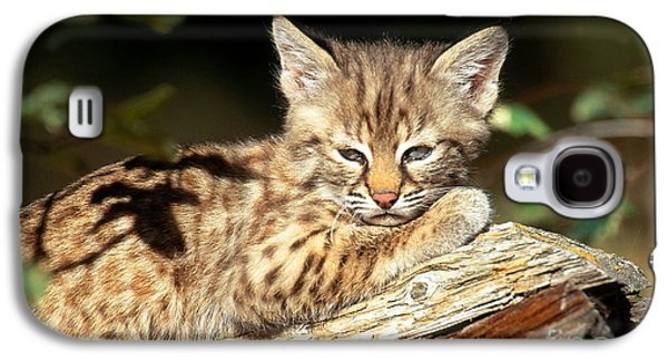 Bobcat Kitten Lynx Rufus Galaxy S4 Case by Art Wolfe