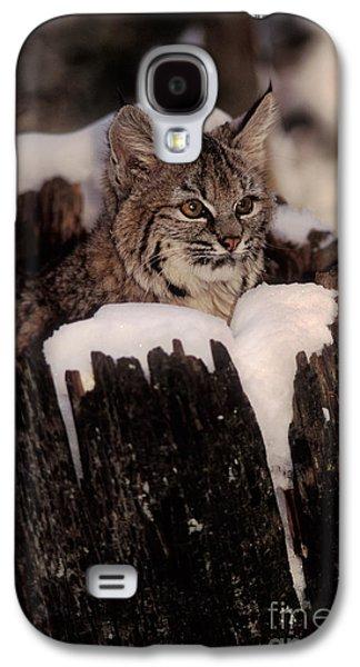 Bobcat Kitten Galaxy S4 Case by Ron Sanford