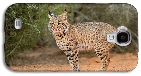 Bobcat (lynx Rufus Galaxy S4 Case