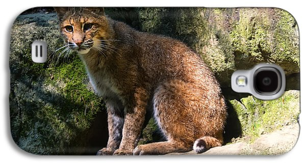 Bobcat Resting On Rocks Galaxy S4 Case by Chris Flees