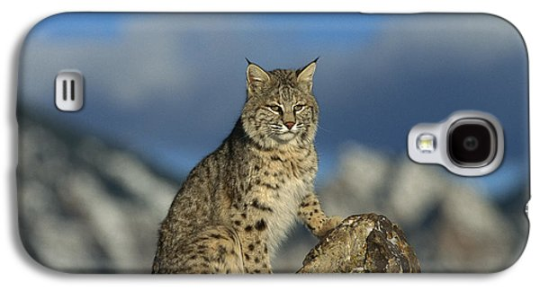 Bobcat  Rocky Mountains Galaxy S4 Case by Konrad Wothe