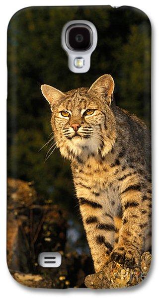 Bobcat Galaxy S4 Case by Ron Sanford