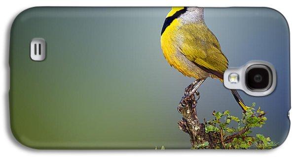 Bokmakierie Bird - Telophorus Zeylonus Galaxy S4 Case