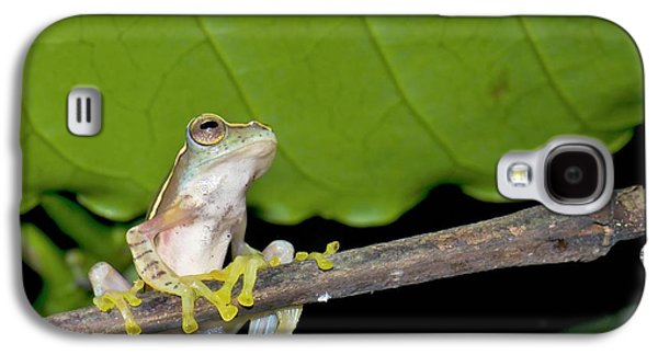 Boulenger's Tree Frog Galaxy S4 Case by K Jayaram