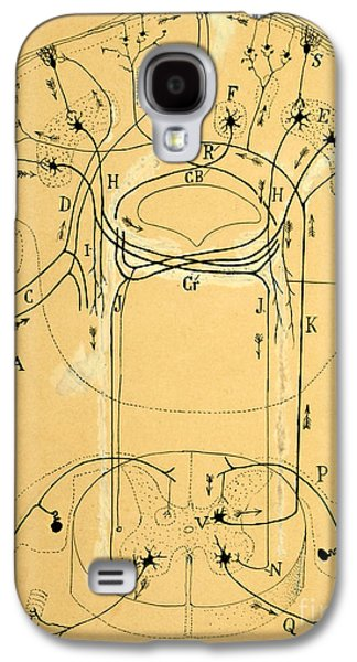 Brain Vestibular Sensor Connections By Cajal 1899 Galaxy S4 Case by Science Source
