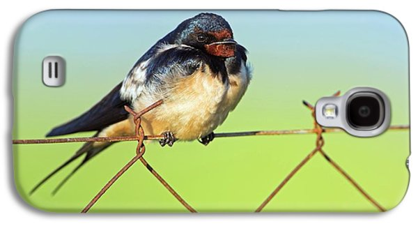 Bran Swallow On A Fence Galaxy S4 Case