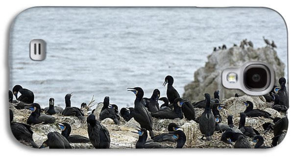 Brandt's Cormorant Colony At Point Lobos State Natural Reserve Galaxy S4 Case