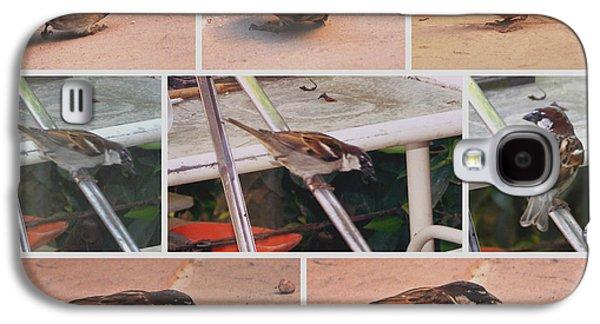 Brown Headed Sparrow Galaxy S4 Case