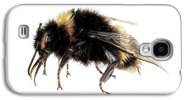 Buff-tailed Bumblebee Galaxy S4 Case