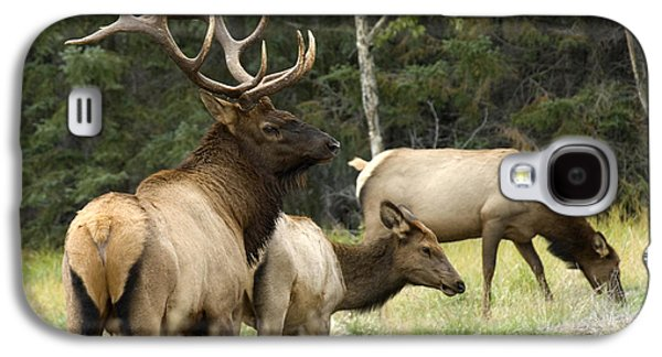 Bull Elk With His Harem Galaxy S4 Case by Bob Christopher