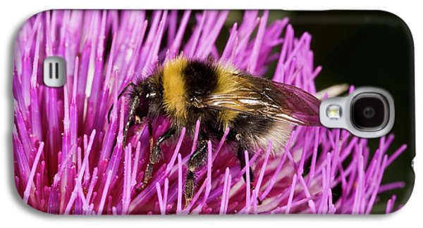 Bumblebee Feeding On Thistle Flower Galaxy S4 Case by Bob Gibbons