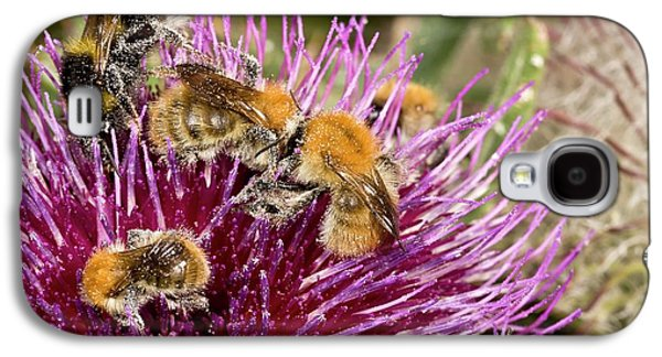 Bumblebees Feeding On Thistle Flower Galaxy S4 Case by Bob Gibbons