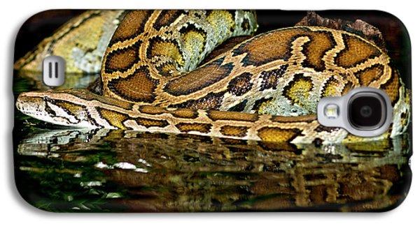 Burmese Python, Python Molurus Galaxy S4 Case by David Northcott