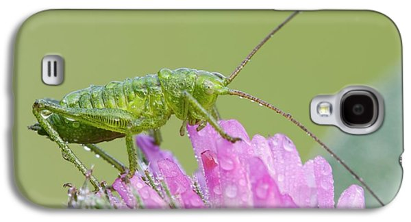 Bush Cricket Galaxy S4 Case by Heath Mcdonald