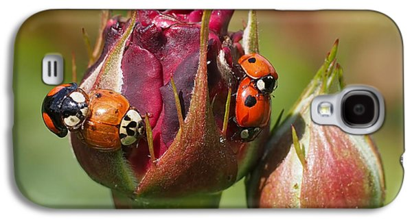 Busy Ladybugs Galaxy S4 Case by Rona Black