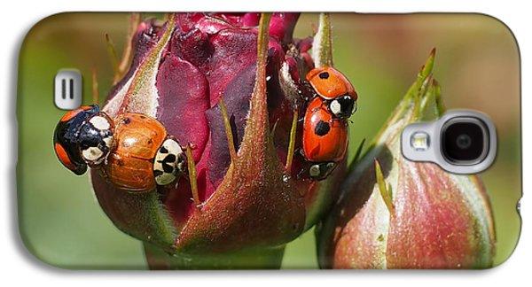 Busy Ladybugs Galaxy S4 Case