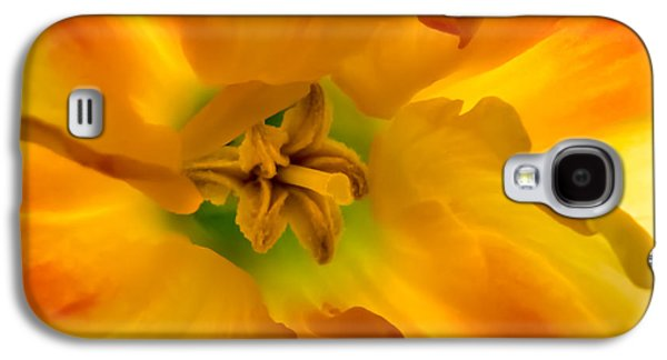 Butterfly Daffodil Springtime Galaxy S4 Case