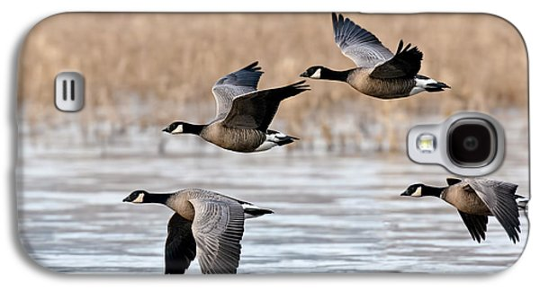 Cackling Geese Flying Galaxy S4 Case