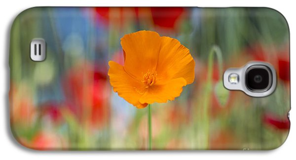 California Poppy Galaxy S4 Case by Tim Gainey