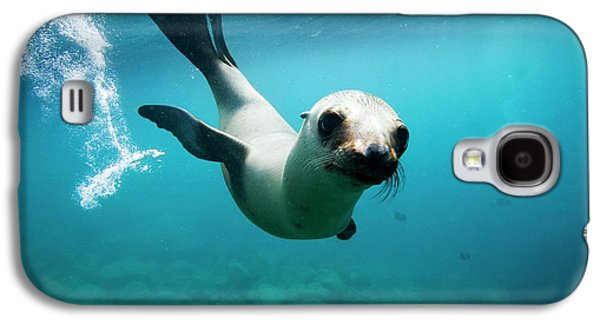 California Sea Lion Pup Galaxy S4 Case by Christopher Swann