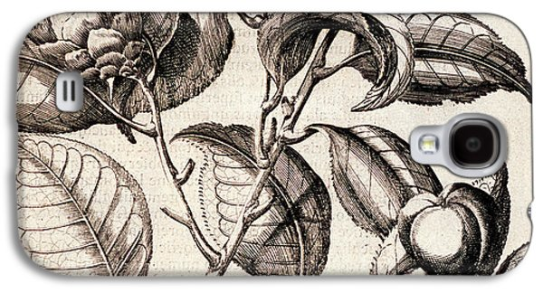 Camellia Japonica Flowers Galaxy S4 Case by Natural History Museum, London