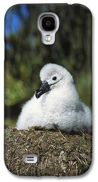 Campbell Albatross Young Chick Campbell Galaxy S4 Case by Tui De Roy