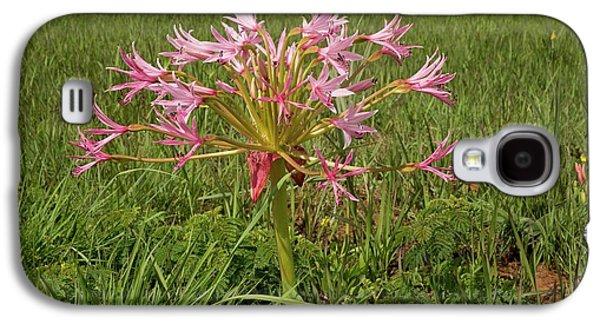 Candelabra Flower (brunsvigia Natalensis) Galaxy S4 Case