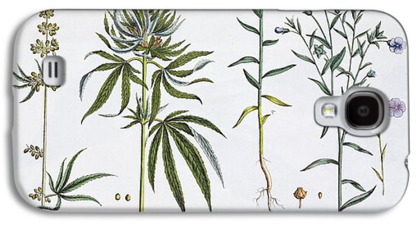 Cannabis And Flax Galaxy S4 Case by Matthias Trentsensky