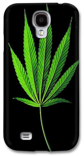 Cannabis Sativa Indica Leaf Galaxy S4 Case by Gilles Mermet