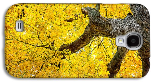 Canopy Of Autumn Leaves Galaxy S4 Case by Tom Mc Nemar