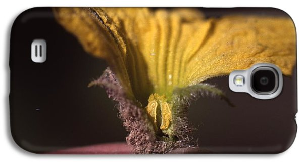 Cantaloupe Flower Galaxy S4 Case by Retro Images Archive