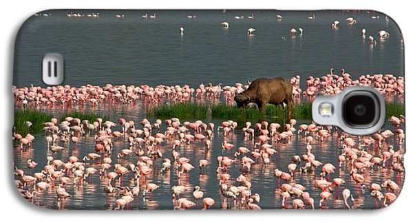 Cape Buffalo And Lesser Flamingos Galaxy S4 Case by Panoramic Images
