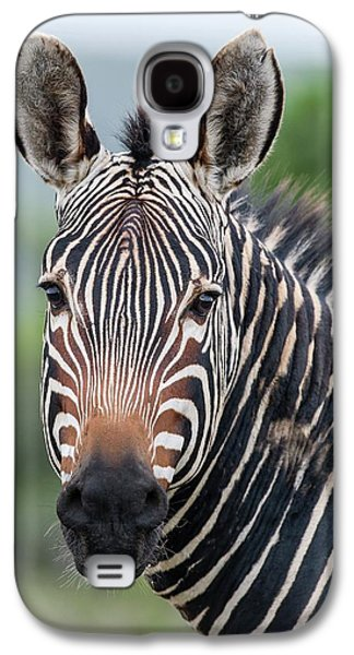 Cape Mountain Zebra Stallion Galaxy S4 Case