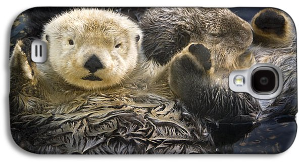 Captive Two Sea Otters Holding Paws At Galaxy S4 Case