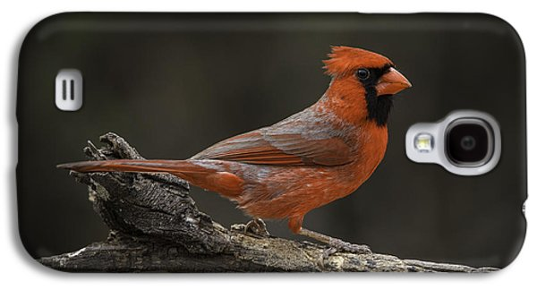 Cardinal 2011-1 Galaxy S4 Case