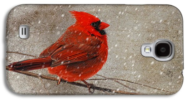 Cardinal In Snow Galaxy S4 Case by Lois Bryan